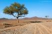 Talh Tree