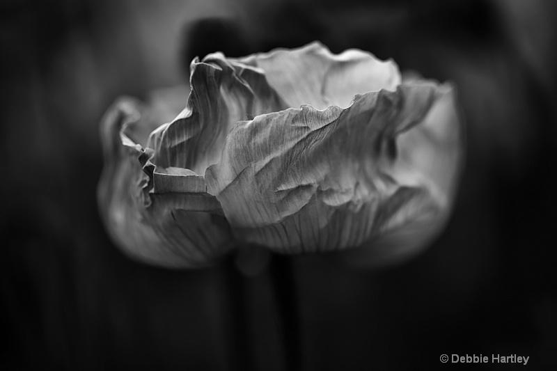 Delicate - ID: 13493757 © Debbie Hartley