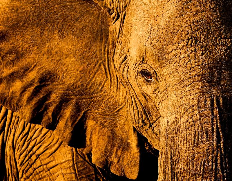 african evening - ID: 13539827 © Dawn Miller