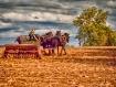 Harvest Time In L...