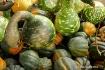 Roadside Gourds i...