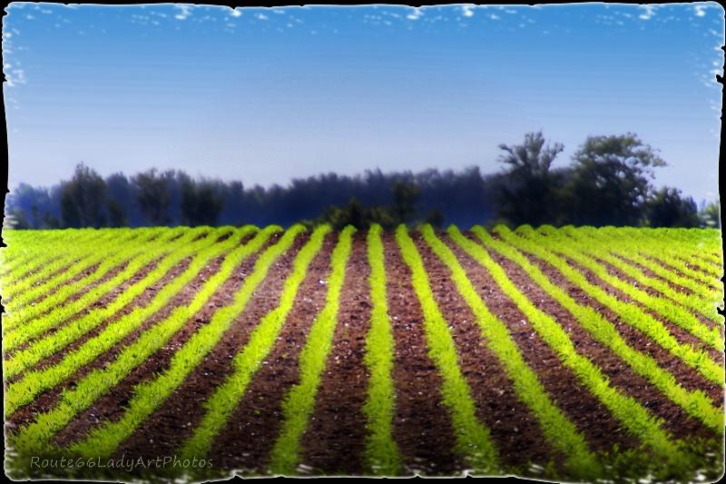Rows & Rows - ID: 13611403 © JudyAnn Rector