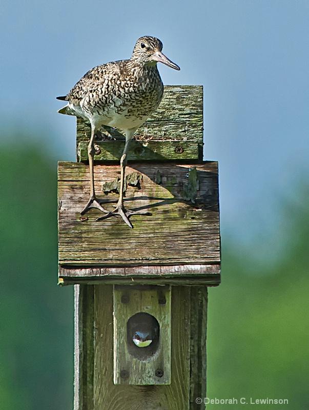 Bird in Nest, Bird on Nest - ID: 13613314 © Deborah C. Lewinson