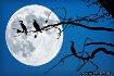 Three Moonlit Cor...