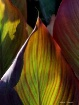 Colours from Natu...