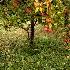 © Mayra Thompson PhotoID # 13622151: The Apple Tree