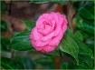 Wet Pink Perfecti...