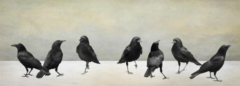 Seven Crows of San Simeon