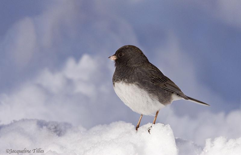 Winter's Peace - ID: 13630990 © Jacqueline A. Tilles