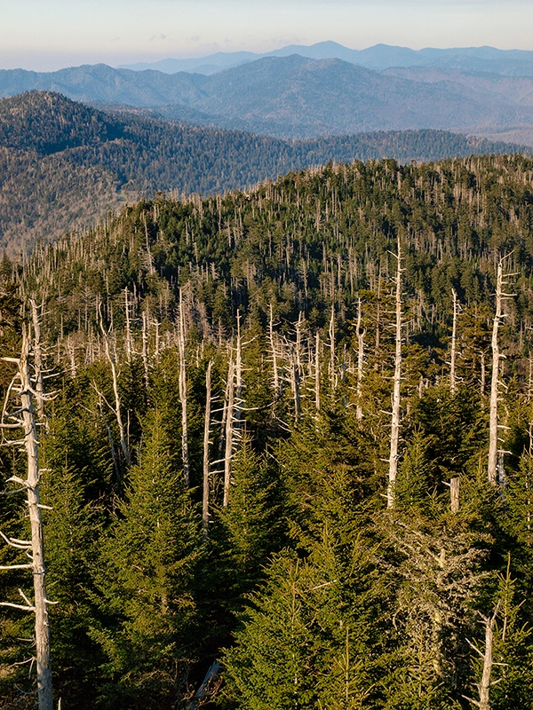 The Great Smoky Mountains From The Top - ID: 13632480 © Philip B. Ludwig