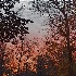 © Susanne M. Arendt PhotoID # 13633750: Sunrise at Wakulla Springs