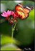 Natures beautiful...