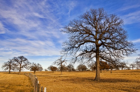 Texas winter pastures