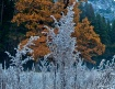 Winters Layers