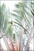 Triangle Palm