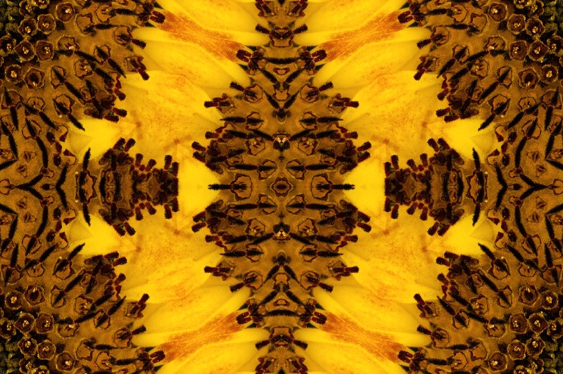 Abstract of a Sunflower - ID: 13664443 © Don Johnson