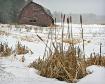 Snowy ADK Barn
