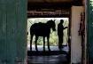 Through the Barn ...