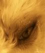A DOG'S EYE V...