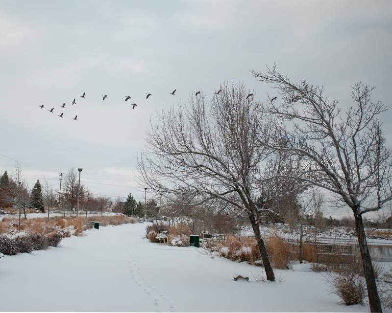 Snow scape in Reno