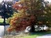 Painted Autumn