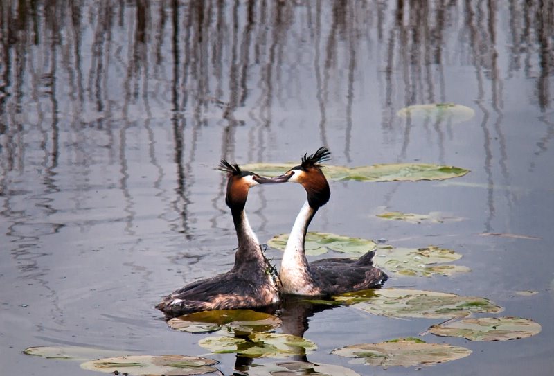 Love On the Canal