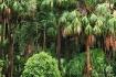 Backyard Rainfore...