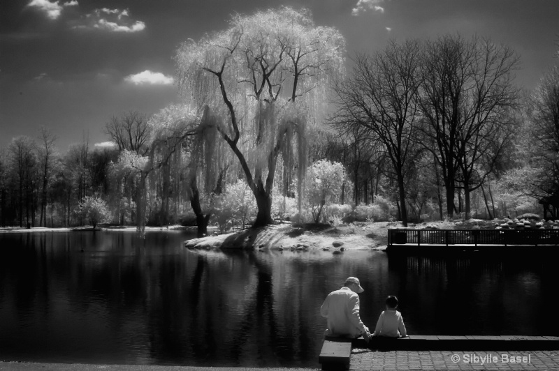 Sunny day in Infrared - ID: 13721484 © Sibylle Basel