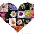 © Theresa Marie Jones PhotoID # 13721656: I LOVE PHOTOGRAPHING FLOWERS