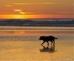 A walk at Sunset