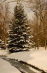 'A Winter Wal...