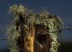 Lichen on a post
