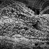 © Ravi S. Hirekatur PhotoID # 13743951: Young Alligator s