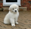 Puffy Pup