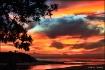 Banksia Sky