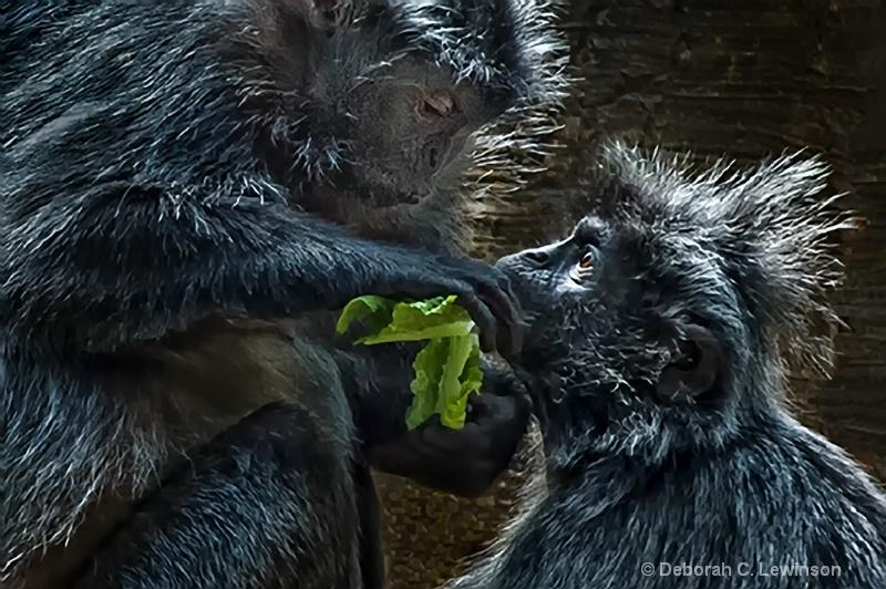 Silvered Leaf Monkeys - ID: 13791458 © Deborah C. Lewinson