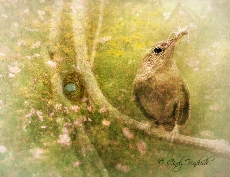 April 2015 Photo Contest 1st Place Prize Winner