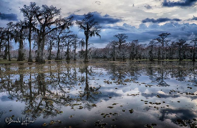 Caddo Lake  - ID: 13793164 © Brenda W. LaFleur