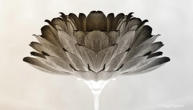 A Simple Flower - ID: 13793512 © paul parent