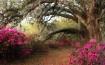Magnolia Oaks #1