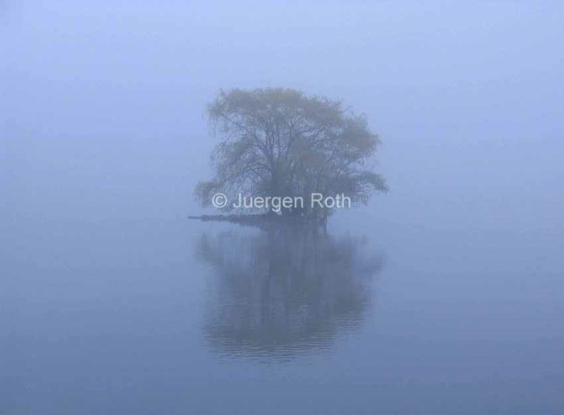 Misty Morning at Jamaica Pond - ID: 13801987 © Juergen Roth