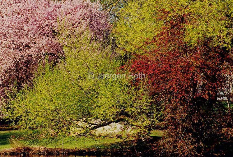 Spring Colors - ID: 13801991 © Juergen Roth