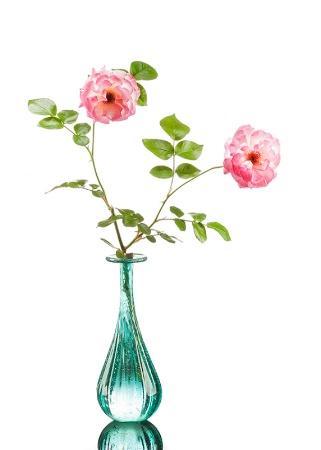 Roses In Vase On White