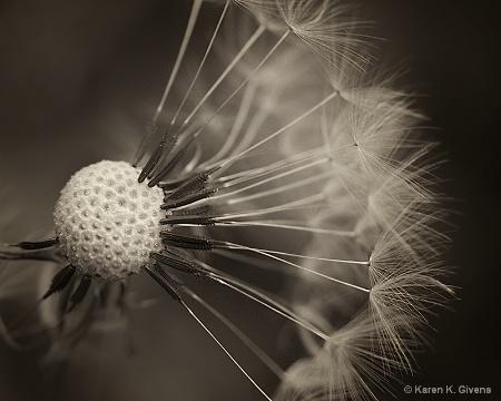 Fairy Weed