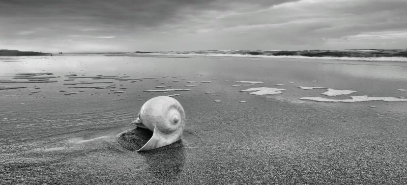Seashell at low tide