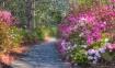 Azalea Path