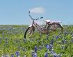 Bluebonnet Bike R...