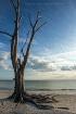 Beside The Tide
