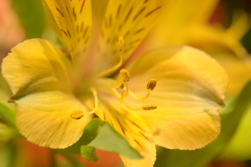 Lily - ID: 13837878 © cari martin