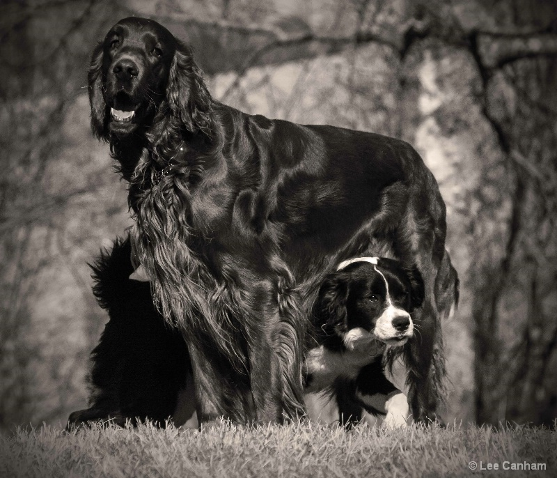 A dog is a dog´s best friend